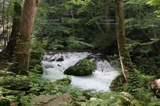 森を流れる川の写真・画像素材[2277860]