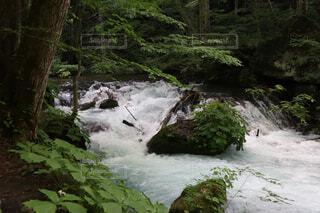 木々に囲まれた滝の写真・画像素材[2277861]