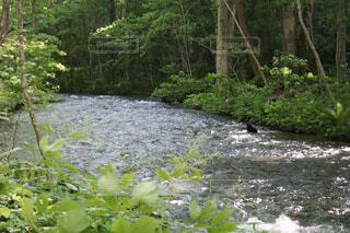 森を流れる川の写真・画像素材[2277866]