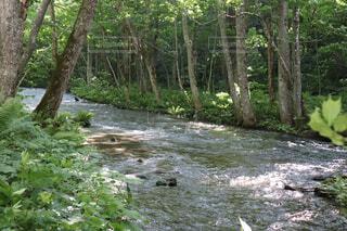 渓流の写真・画像素材[2277867]