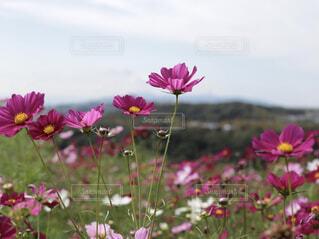 植物にピンクの花の写真・画像素材[1692218]