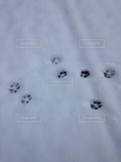 雪に覆われた斜面の写真・画像素材[1694530]