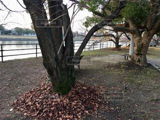 河川敷の樹木の写真・画像素材[1704594]