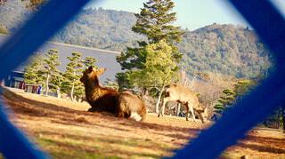 鹿と自然の写真・画像素材[1704211]