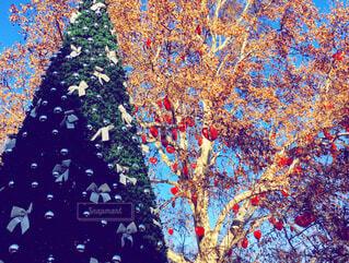 クリスマス ツリーの写真・画像素材[1696886]