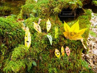 白谷雲水峡で見つけた葉っぱの妖精たちの写真・画像素材[1697661]