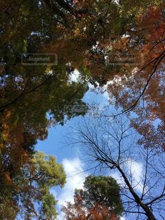 木と空の写真・画像素材[1698286]