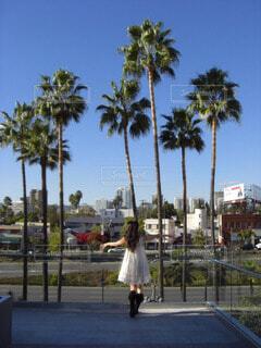 LAの写真・画像素材[59148]