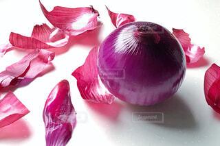 紫タマネギの写真・画像素材[1774145]