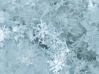 雪の結晶の写真・画像素材[1780096]
