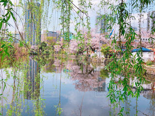 上野の森の写真・画像素材[1988951]