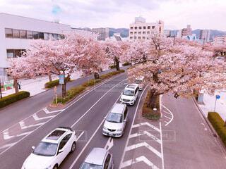 桜並木の写真・画像素材[2049625]