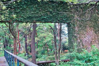 森林浴の写真・画像素材[2088725]