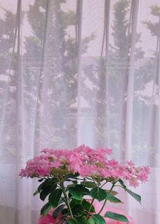 紫陽花の写真・画像素材[2116726]