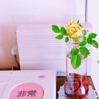 黄バラの写真・画像素材[2138094]