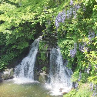 明神滝の写真・画像素材[2141098]