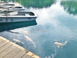 鯉の写真・画像素材[2167040]