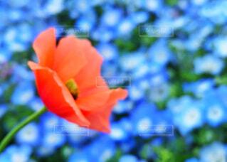 赤い花の写真・画像素材[2175648]