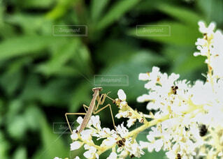 白い花の写真・画像素材[2226692]