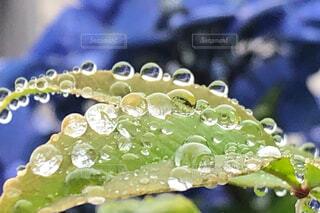 梅雨の写真・画像素材[2253611]