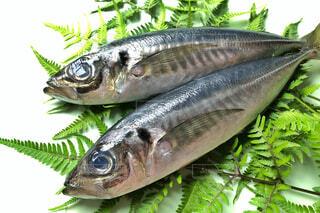 魚の写真・画像素材[2263381]