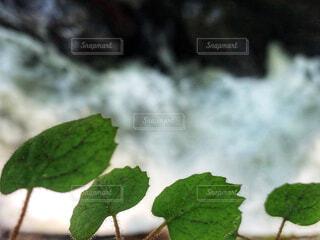 渓流の写真・画像素材[2470792]