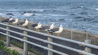 海鳥の写真・画像素材[2501258]