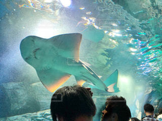 水族館の写真・画像素材[2508078]