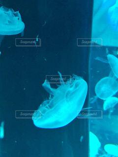 水族館の写真・画像素材[2515541]