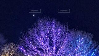 月夜の写真・画像素材[2775952]