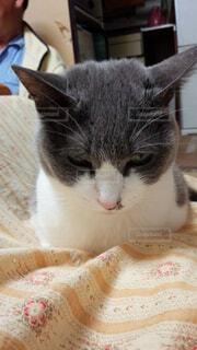 テーブルの上に座って猫の写真・画像素材[1698836]