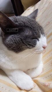 近くに猫のアップの写真・画像素材[1698838]