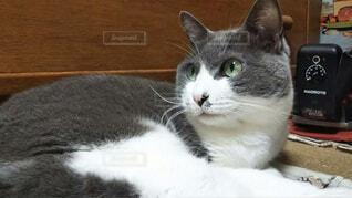 白い面の上に横たわる猫の写真・画像素材[1698847]