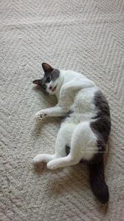 地面に横たわっている茶色と白犬の写真・画像素材[1698848]