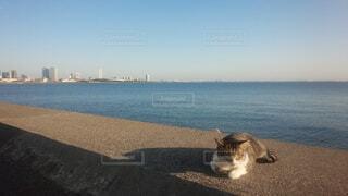 水の体の横に座っている猫の写真・画像素材[1699264]