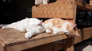 木製のテーブルの上で眠っている猫の写真・画像素材[1699275]