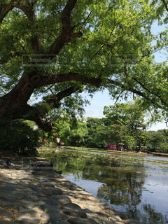 緑溢れる庭園の写真・画像素材[1699119]