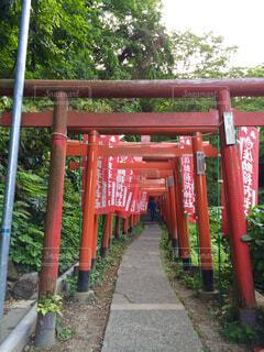 鎌倉の神社の鳥居の写真・画像素材[1699827]