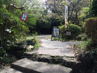 旅行先の庭と野良猫の写真・画像素材[1700642]