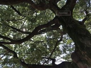 公園の樹木の写真・画像素材[1832496]