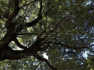 公園の樹木の写真・画像素材[1832497]