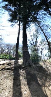 木々の写真・画像素材[1832531]