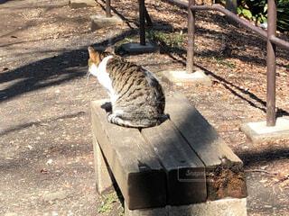 公園のベンチに座る猫の写真・画像素材[1832585]
