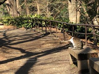 公園のベンチに座っている猫の写真・画像素材[1832587]