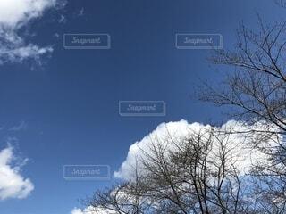 青空の写真・画像素材[1832592]