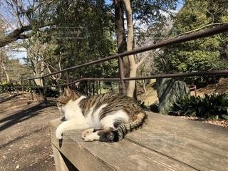 ベンチに横になっている猫の写真・画像素材[1832597]