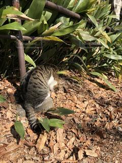 野良猫の写真・画像素材[1832602]