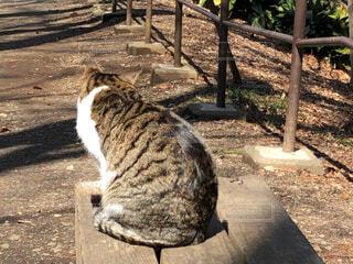 公園のベンチに座っている猫の写真・画像素材[1832624]
