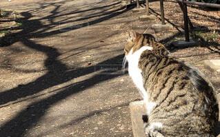 公園のベンチに座っている猫の写真・画像素材[1832625]