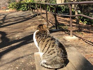公園のベンチに座っている猫の写真・画像素材[1832626]